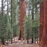 Sequoia 5