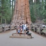 Sequoia 6